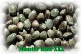 Sensas Monster Hanf XXL 0,5kg